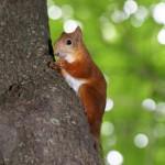 funny-squirrel-eats-a-nut
