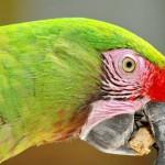 parrot (3)