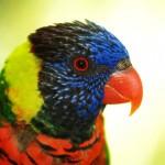 parrot-headshot