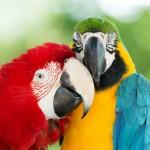 parrots (11)