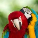 parrots (13)