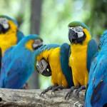 parrots (18)