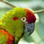 parrots (19)