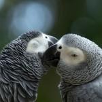 parrots (4)