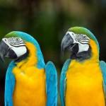 parrots (6)