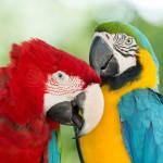 parrots (7)