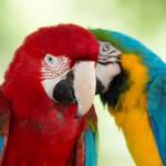 parrots (8)