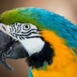 pretty-macaw-parrot-portrait