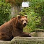relaxing-bear