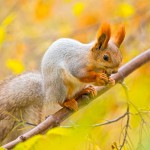 squirrel-eating-nut-on-the-branch