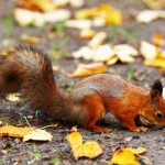 squirrel-in-the-autumn-forest (2)