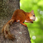 squirrel-sitting-in-a-tree-eating-a-nut