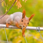 squirrel-the-squirrel-looks-for-to-eat