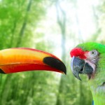 toco-toucan-and-military-macaw-green-parrot