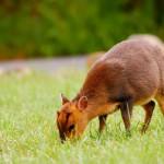 wild-deer-animal