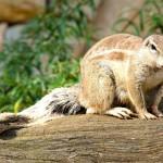wild-rodent (2)